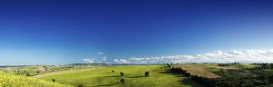 Panoramic view of a green field with lonely trees, Tuscany, Italy