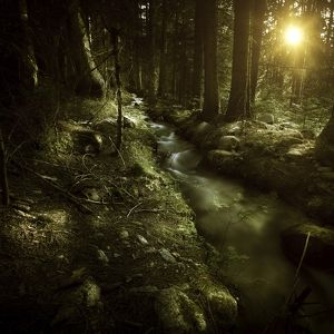 Small stream in a forest at sunset, Pirin National Park, Bulgaria